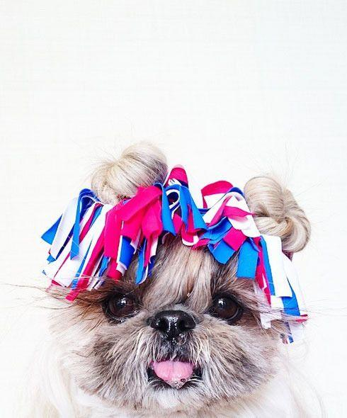 The cute canine can even pull off a hat.