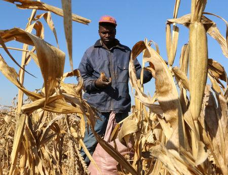 Zimbabwe to start paying white farmers compensation after April