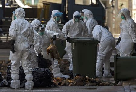 Health workers pack dead chickens into trash bins at a wholesale poultry market in Hong Kong December 31, 2014. REUTERS/Tyrone Siu
