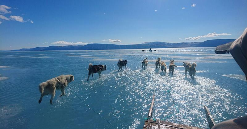 Walking on Water? Snow Dogs Haul Sled Through Rapidly-Melting Ice Amid Greenland Climate Crisis