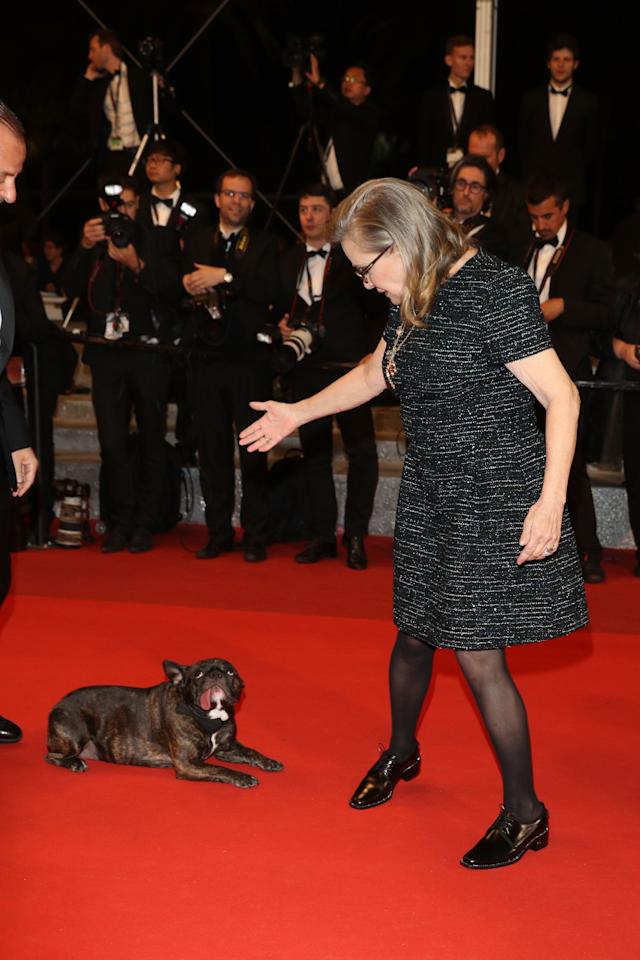 Carrie Fisher and her dog Gary attends 'The Handmaiden (Mademoiselle)' premiere during the 69th annual Cannes Film Festival in 2016.
