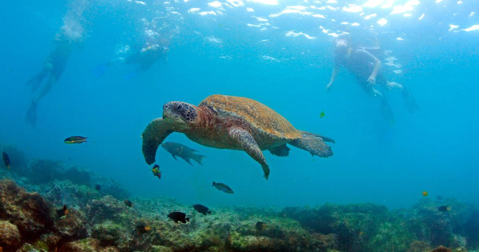 Four Seasons Resort Nevis has partnered with the Sea Turtle Conservancy to educate guests about conservation.