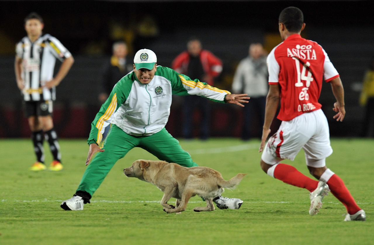 """A police officer and player Oscar Rodas (R) of Colombia's Independiente Santa Fe, try to catch a dog that get in the field during the Copa Sudamericana football match between Santa Fe and Brazil's Botafogo, held at Nemesio Camacho """"El Campin"""" stadium in Bogota, Colombia, on October 25, 2011. AFP PHOTO/Guillermo Legaria (Photo credit should read GUILLERMO LEGARIA/AFP/Getty Images)"""