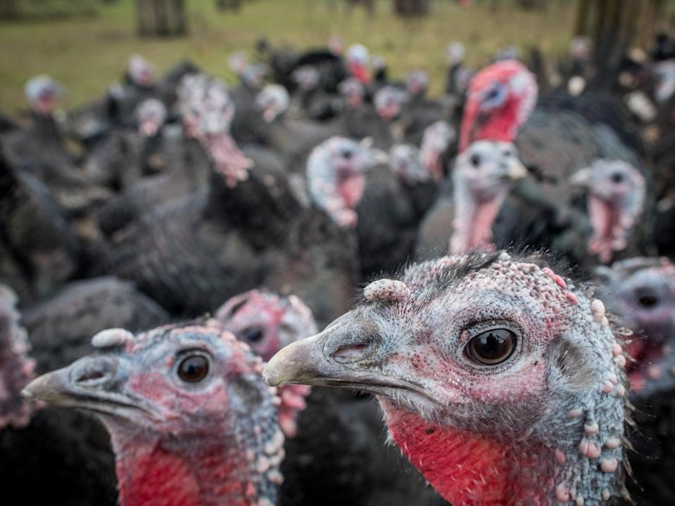 Free-range turkeys and other birds will soon have to be kept indoors (Getty Images)