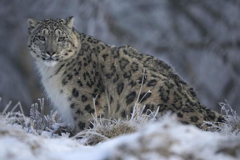 Soon, Walk Amid Snow Leopards and Himalayan Bears at Kashmir's First Zoo in Pahalgam Valley
