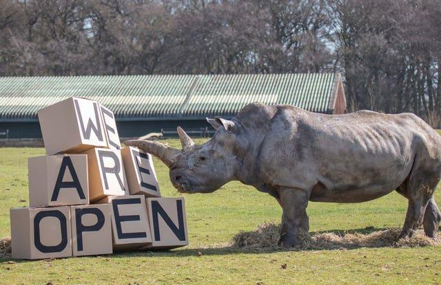 A southern white rhino beside a 'we are open' sign