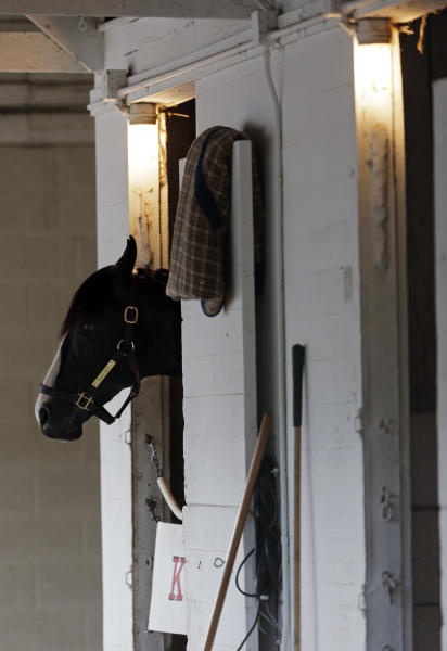 Kentucky Derby entrant Black Onyx is seen in his stall before his morning workout at Churchill Downs Thursday, May 2, 2013, in Louisville, Ky. Saturday will be the 139th running of the Kentucky Derby. (AP Photo/Charlie Riedel)