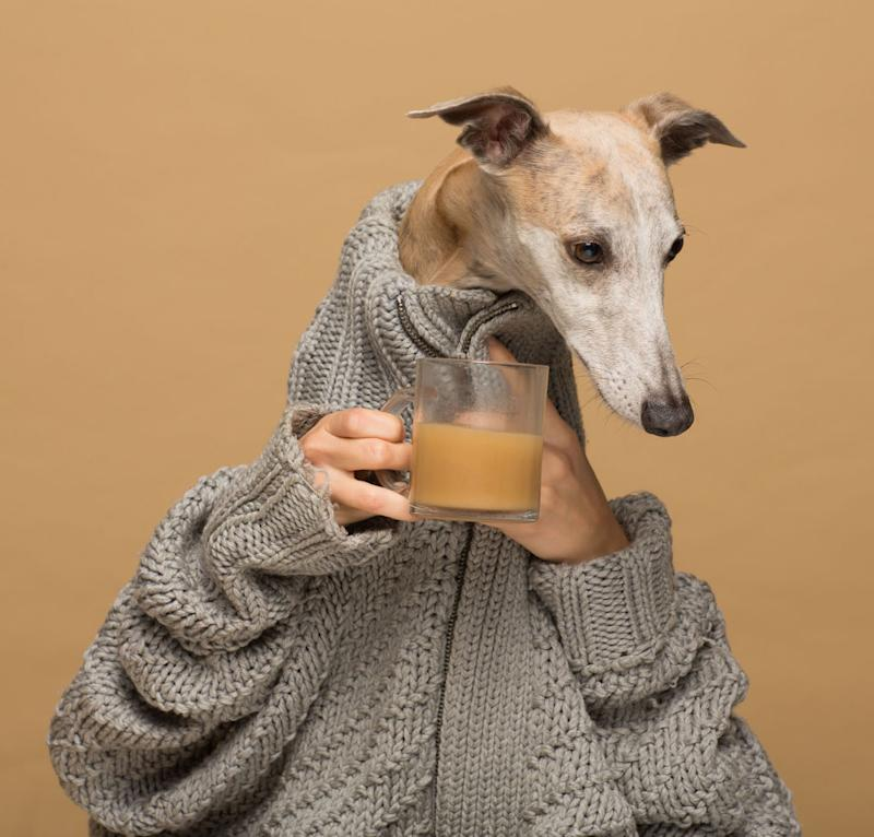 Clemence the dog poses for a Rooffee ad. (Rooffee)