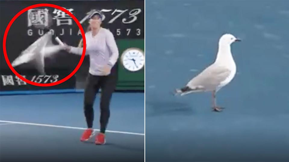 A rogue seagull can be seen invading a court at Melbourne Park on Monday night.