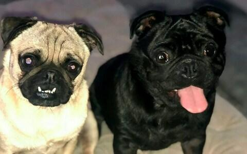Two of the missing dogs