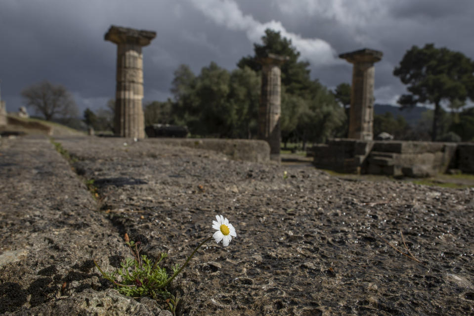 A daisy grows at the temple of Hera in ancient Olympia, the place that hosted the ancient Olympic Games on Monday, March 22, 2021. Greece's government reopened the ancient sites nationwide after four months as it prepares to restart the tourism season in mid-May. (AP Photo/Petros Giannakouris)