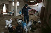 Ibrahim, a former tailor, took up farming in the rebel-held Idlib region in northern Syria and says Azolla which is rich in protein has given him huge savings over traditional animal feeds like hay or silage