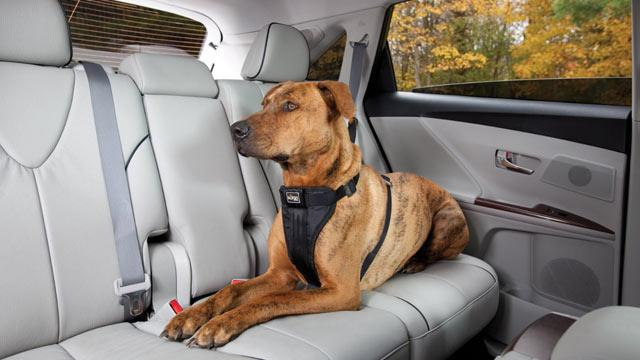 N.J. May Become First State to Require Seat Belts for Pets