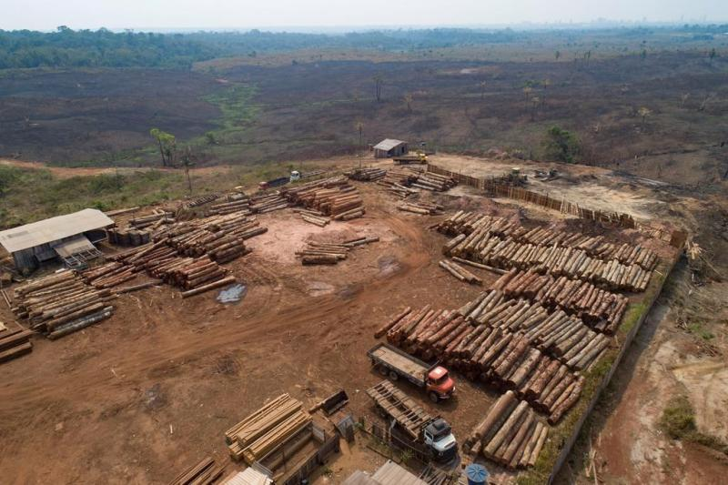Brazil corporations urge action on illegal logging in Amazon