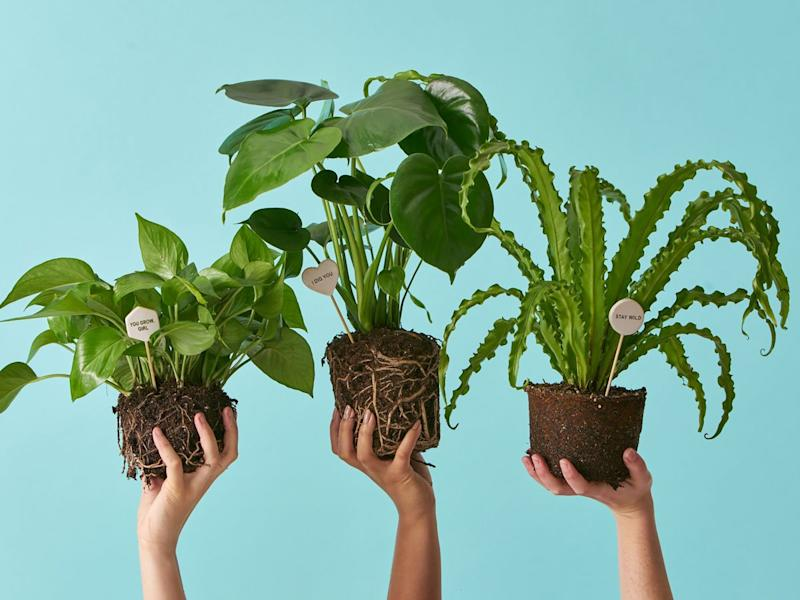These Are The Best Places To Buy Plants Online