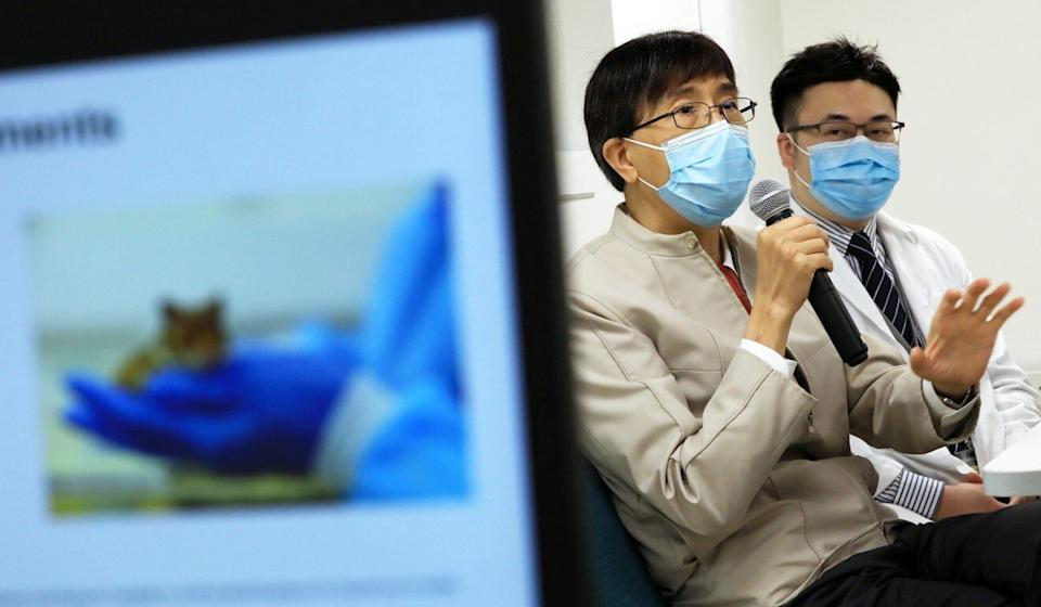 Dr Yuen Kwok-yung (left) and Dr Jasper Chan of Hong Kong University's Department of Microbiology discuss how surgical mask partitions reduced transmission of Sars-CoV-2 among hamsters. Photo: May Tse