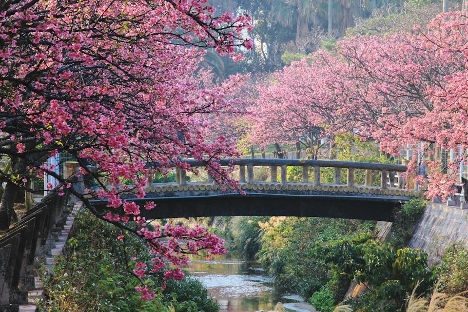"""<p>Spring is in the air which means one thing: spectacular <a href=""""https://www.goodhousekeeping.com/uk/lifestyle/travel/a32644233/deer-relaxing-under-cherry-blossom-trees-japan-video/"""" rel=""""nofollow noopener"""" target=""""_blank"""" data-ylk=""""slk:cherry blossom"""" class=""""link rapid-noclick-resp"""">cherry blossom</a> displays to brighten up our daily walks. While this year it's all about appreciating the pink and white hues along the tree-lined streets or parks and gardens at home, we can't help but think about the remarkable places around the world that we can usually visit to witness incredible spring-time scenes.</p><p>While a holiday abroad is off the table this spring, we thought we'd take a look at the best places in the world for cherry blossom displays, for when we can travel next year.</p><p><a href=""""https://www.goodhousekeeping.com/uk/lifestyle/travel/a26129124/cherry-blossom-japan-holiday/"""" rel=""""nofollow noopener"""" target=""""_blank"""" data-ylk=""""slk:Japan"""" class=""""link rapid-noclick-resp"""">Japan</a> is a must-visit if you love gorgeous cherry blossom displays and as it's the <a href=""""https://www.goodhousekeeping.com/uk/lifestyle/travel/a28975916/best-time-visit-japan/"""" rel=""""nofollow noopener"""" target=""""_blank"""" data-ylk=""""slk:most beautiful time to visit"""" class=""""link rapid-noclick-resp"""">most beautiful time to visit</a>, it's the perfect trip to plan a year in advance (<a href=""""https://www.goodhousekeepingholidays.com/search?locations%5Bsearch%5D=Japan&locations%5Bcountry%5D=JP"""" rel=""""nofollow noopener"""" target=""""_blank"""" data-ylk=""""slk:try Good Housekeeping's epic tours for 2022"""" class=""""link rapid-noclick-resp"""">try Good Housekeeping's epic tours for 2022</a>). Meanwhile, across the pond in the States, there's no better spot to see the trees turn pink than in Washington DC. In fact, the trees in DC were gifted from Japan in 1912 and continue to bloom to this day.</p><p>Of course, Europe showcases many magnificent cherry blossom displays without the long-haul flight. Paris, Stockholm, """