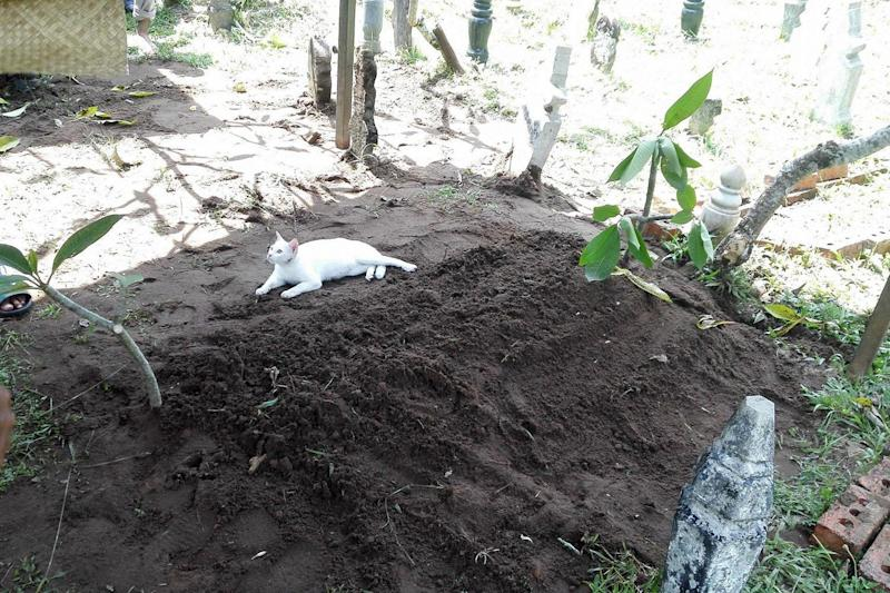 The cat would not leave the grave despite funeral-goers best efforts: Souffan CZ / Facebook
