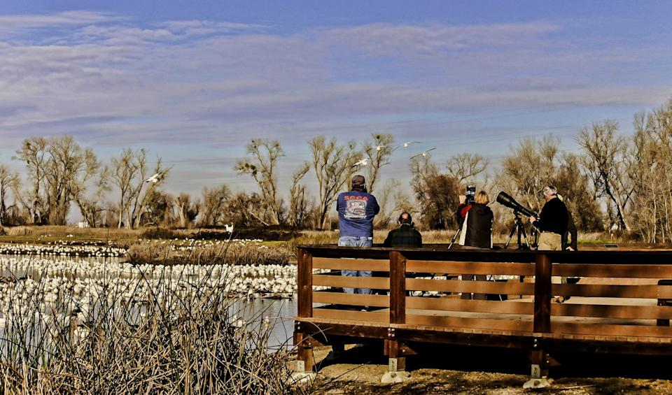 Photographers on the viewing platform at California's Colusa National Wildlife Refuge.