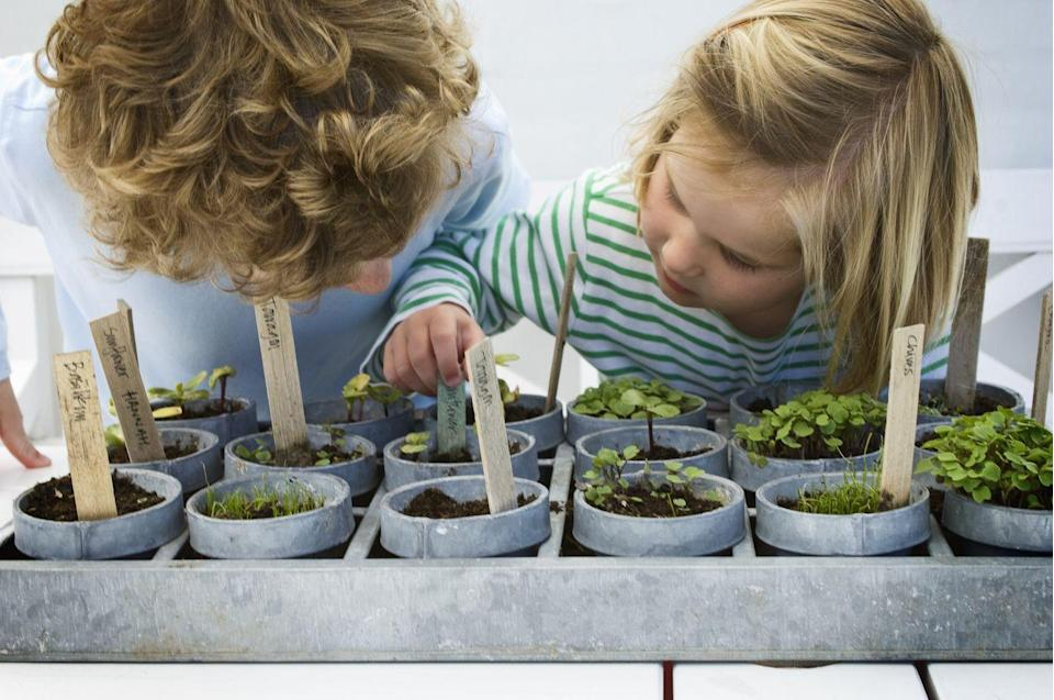 """<p>A great thing to do this summer is start a vegetable garden by saving your own seeds from fruits and vegetables. """"When we shop for vegetables and fruit, we try to find the ones with seeds inside, or the ones that can be grown from cuttings,"""" says Elle Meager, founder of <a href=""""https://www.outdoorhappens.com/"""" rel=""""nofollow noopener"""" target=""""_blank"""" data-ylk=""""slk:Outdoor Happens"""" class=""""link rapid-noclick-resp"""">Outdoor Happens</a>. """"It's very easy, lots of fun, and you still get to eat the vegetables so you don't lose any money."""" She recommends starting with pumpkin, squash, cucumber, and tomato. You can develop your own <a href=""""https://www.countryliving.com/gardening/garden-ideas/a32730789/gardening-during-quarantine/"""" rel=""""nofollow noopener"""" target=""""_blank"""" data-ylk=""""slk:love for gardening"""" class=""""link rapid-noclick-resp"""">love for gardening</a> alongside your kids.<br></p>"""