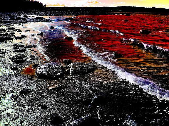Red tide at sunset