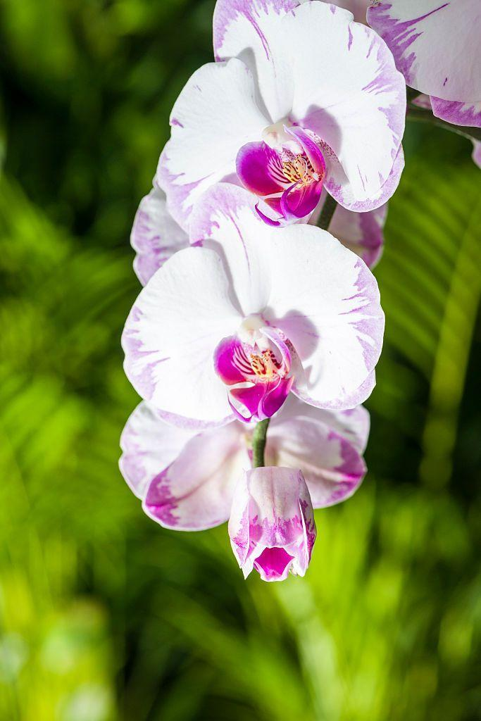 "<p><a href=""https://www.amazon.com/Orchid-Whisperer-Secrets-Growing-Beautiful/dp/1452101280/ref=sr_1_7?ie=UTF8&qid=1508853852&sr=8-7&keywords=orchids&tag=syn-yahoo-20&ascsubtag=%5Bartid%7C10063.g.35661704%5Bsrc%7Cyahoo-us"" rel=""nofollow noopener"" target=""_blank"" data-ylk=""slk:Orchids"" class=""link rapid-noclick-resp"">Orchids</a> grow all over the world and have <a href=""https://www.livescience.com/28547-surprising-orchid-facts.html"" rel=""nofollow noopener"" target=""_blank"" data-ylk=""slk:symmetry similar"" class=""link rapid-noclick-resp"">symmetry similar</a> to human faces! This bilateral symmetry means that when split vertically down the middle, the two halves mirror each other. </p><p><strong>Bloom season</strong>: Different seasons</p><p><a class=""link rapid-noclick-resp"" href=""https://go.redirectingat.com?id=74968X1596630&url=https%3A%2F%2Fwww.homedepot.com%2Fp%2FJust-Add-Ice-White-Mini-Orchid-Plant-in-Ceramic-Pot-231181%2F305906874&sref=https%3A%2F%2Fwww.redbookmag.com%2Fhome%2Fg35661704%2Fbeautiful-flower-images%2F"" rel=""nofollow noopener"" target=""_blank"" data-ylk=""slk:SHOP ORCHIDS"">SHOP ORCHIDS</a></p>"