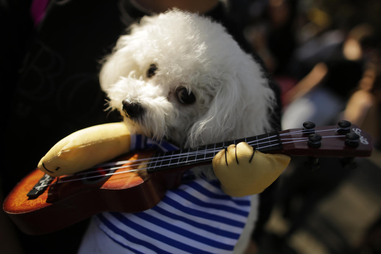 dogs in halloween costumes attend the 27th annual tompkins square halloween dog parade