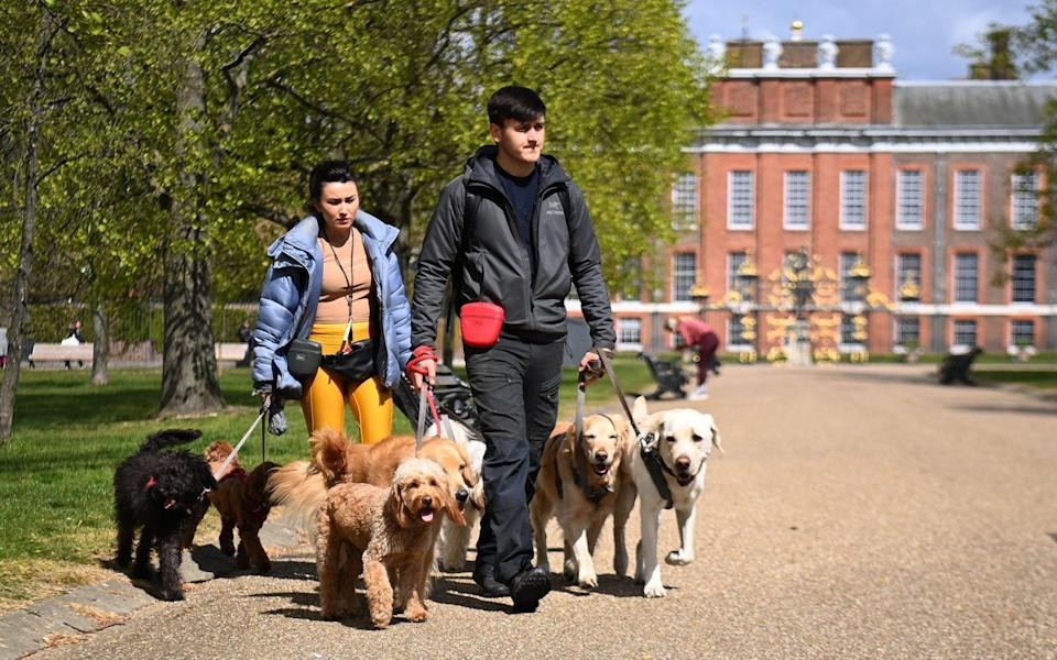 Dog walkers at a park in London, Britain - ANDY RAIN/EPA-EFE/Shutterstock
