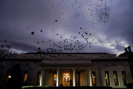 Starlings fly over the West Wing of the White House in Washington