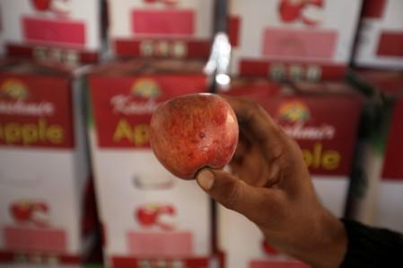 A worker displays a rotten apple at a warehouse, in Sopore