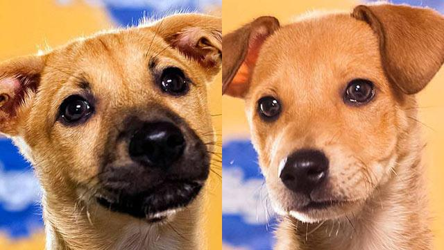 2013 Puppy Bowl's Starting Lineup