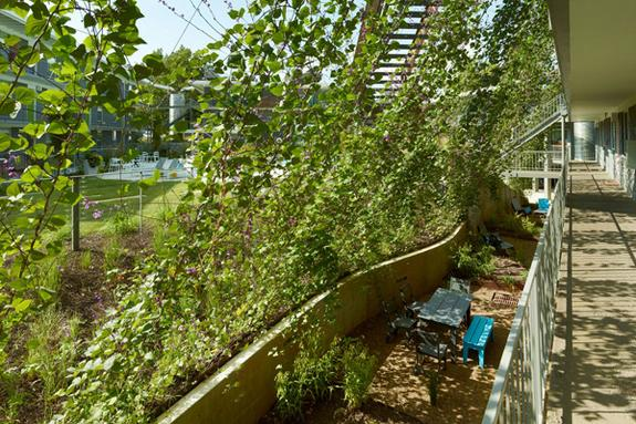 View of new serpentine retaining wall and cable trellis system at ECO Modern Flats. Serpentine retaining walls addressed erosion on the sloping site and carve out patio areas for ground level units. A green screen of flowering vines shades the