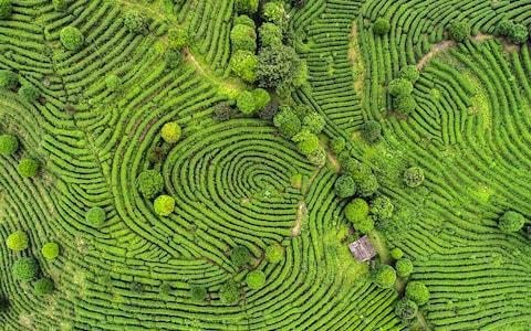 Tea terraces is one of the country's draws - Credit: istock