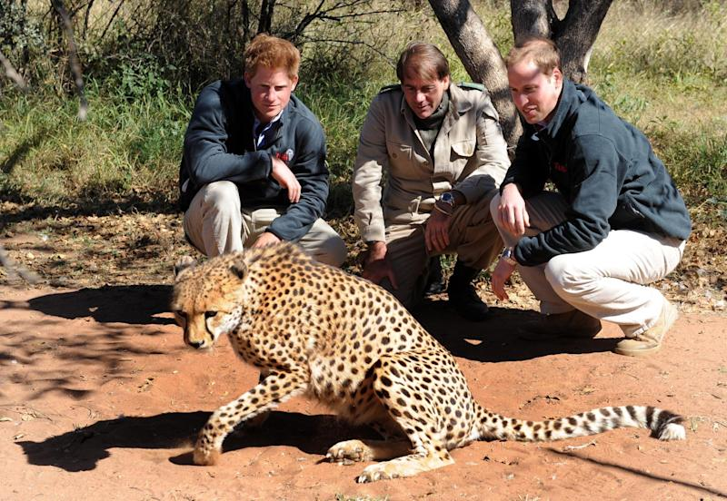 Prince Harry and Prince William join park manager Neil Whitson look at a a cheetah during a visit to the Mokolodi Nature Reserve in Gabarone, Botswana.