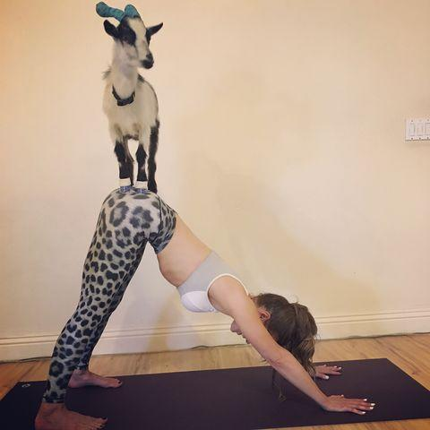 "<p>Kate shared on Instagram in 2018 that she spent her birthday doing goat yoga. 'We all prayed that the goat's blessings would happen on [ex] Michael's mat and they did,' she wrote in the caption of photos, which show her doing all kinds of yoga moves while goats hung around.</p><p><strong>RELATED: </strong><a href=""https://www.womenshealthmag.com/uk/fitness/yoga/g25471397/best-yoga-mats/"" rel=""nofollow noopener"" target=""_blank"" data-ylk=""slk:34 yoga mats to get your practice done and dusted"" class=""link rapid-noclick-resp"">34 yoga mats to get your practice done and dusted</a></p><p><a href=""https://www.instagram.com/p/BlwAlU1HjAO/"" rel=""nofollow noopener"" target=""_blank"" data-ylk=""slk:See the original post on Instagram"" class=""link rapid-noclick-resp"">See the original post on Instagram</a></p>"