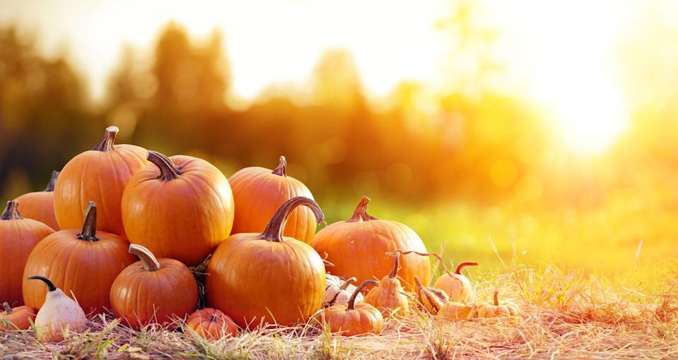 """<p>Sweater weather is finally here, which means the country has pumpkin patches galore! Visiting a pumpkin patch remains a tradition for many Americans celebrating the spooky season, and since pumpkin patches provide totally festive <a href=""""https://www.goodhousekeeping.com/life/g4561/fall-activities/"""" rel=""""nofollow noopener"""" target=""""_blank"""" data-ylk=""""slk:fall activities"""" class=""""link rapid-noclick-resp"""">fall activities</a> and serve as some of the most picturesque locations, you'll find that most families make the trip at least once a year (can't forget about that photo op!)</p><p>If you're wondering where the best pumpkin patches near you might be, read on for some ideas on where to visit. Gather your family for a day of revelry with endless apple cider, hay mazes and pumpkin-flavored treats! You'll be glad you did! While you're at the farm, you can also find great stuff to get your home fall-ready, like gorgeous <a href=""""https://www.goodhousekeeping.com/home/decorating-ideas/g2716/fall-decorations/"""" rel=""""nofollow noopener"""" target=""""_blank"""" data-ylk=""""slk:fall decorations"""" class=""""link rapid-noclick-resp"""">fall decorations</a> (think natural stuff like gourds, Indian corn and other autumnal accents).</p><p>Get inspired by lush seasonal colors while picking the perfect pumpkin. Thrill your kids with the biggest gourd they've ever seen! Animal-lovers will fall for petting zoos for little ones. As seasons change, you'll remember enjoying these moments. Now start thinking about some <a href=""""https://www.goodhousekeeping.com/holidays/halloween-ideas/g238/pumpkin-carving-ideas/"""" rel=""""nofollow noopener"""" target=""""_blank"""" data-ylk=""""slk:pumpkin carving ideas"""" class=""""link rapid-noclick-resp"""">pumpkin carving ideas</a>! </p>"""