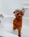 <p>Penny looks completely adorable. Just look at her little towel... </p>