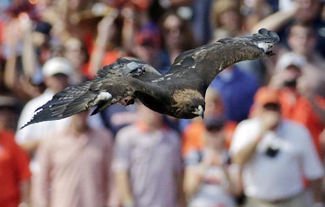 Auburn mascot Nova flies over the stadium prior to the start of an NCAA college football game between the Auburn Tigers and the Western Carolina Catamounts in Auburn, Ala., Saturday, Oct. 12, 2013. (AP Photo/Dave Martin)