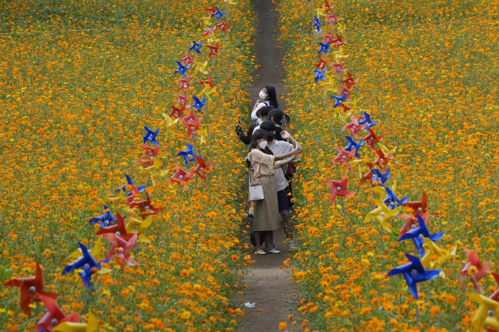People wearing face masks as a precaution against the coronavirus take pictures amid cosmos flowers at Olympic Park in Seoul, South Korea, Thursday, Sept. 23, 2021. (AP Photo/Ahn Young-joon)