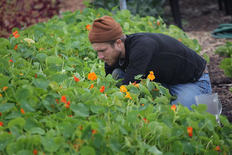 Urban Farm Thrives On Former Site Of Notorious Chicago Housing Project