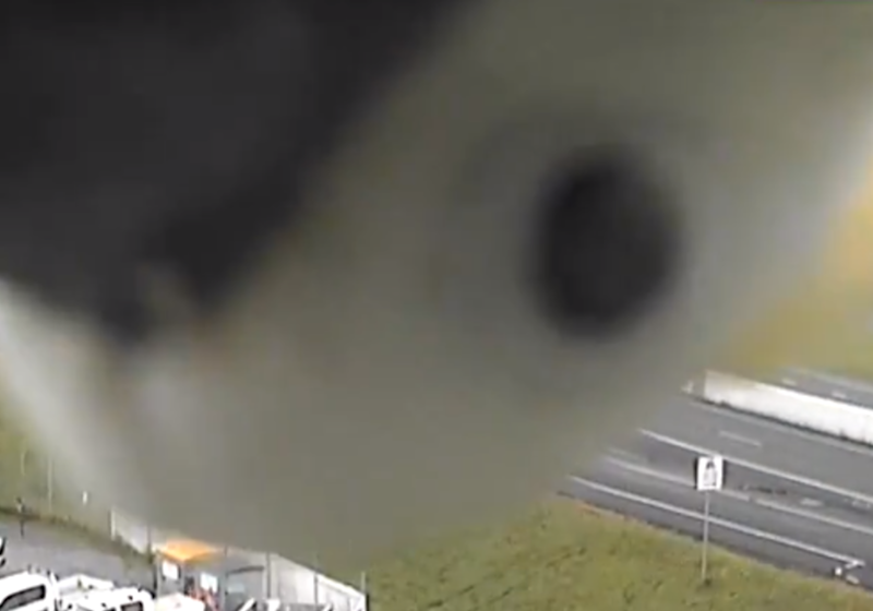Curious cockatoo can't get enough of traffic camera