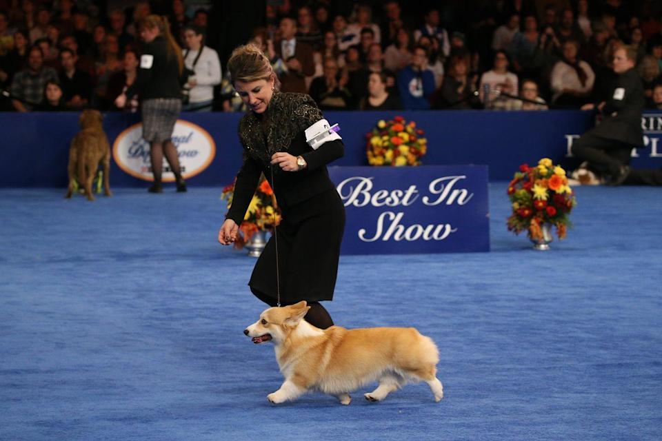 "<p>Lots of people start their Thanksgiving by tuning in to the Macy's Thanksgiving Day Parade, and often flip the channel to a football game when it's over. But if you're not a sports person, there's always the <a href=""http://nds.nationaldogshow.com/kcp.php"" rel=""nofollow noopener"" target=""_blank"" data-ylk=""slk:National Dog Show"" class=""link rapid-noclick-resp"">National Dog Show</a>. It airs after the parade on NBC and will probably result in less yelling than the big game. That is, unless your family members have strong feelings on Daschunds vs Labradors.</p>"