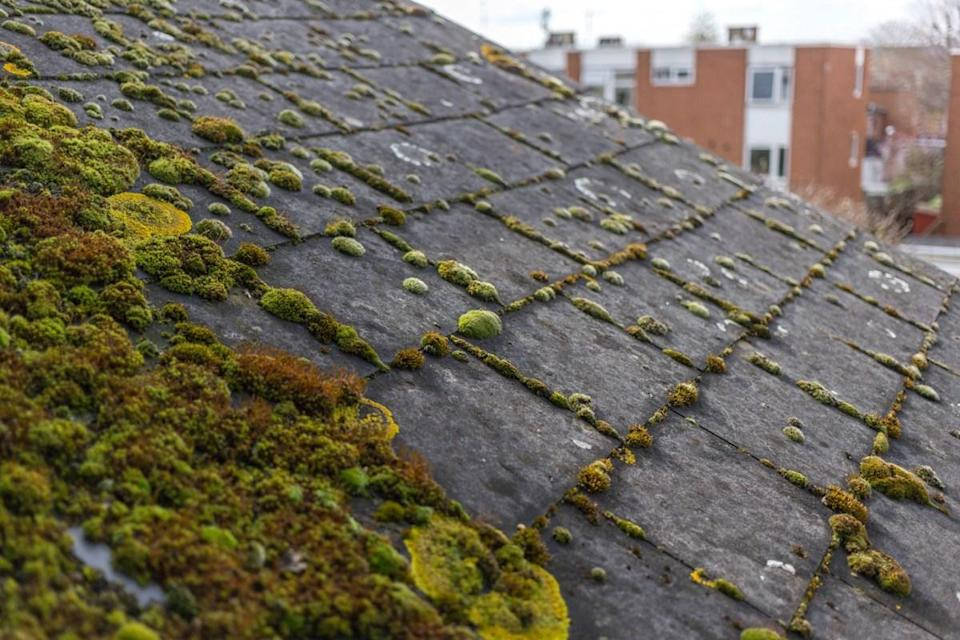 "Moss growing on your roof is an indicator of moisture infiltration and ""will eventually lead to water damage in your home or, even worse, a collapsed roof,"" says <strong>Kershan Bulsara</strong>, <a href=""https://www.roofmaster.net/"" rel=""nofollow noopener"" target=""_blank"" data-ylk=""slk:owner and manager"" class=""link rapid-noclick-resp"">owner and manager</a> of Roofmaster."