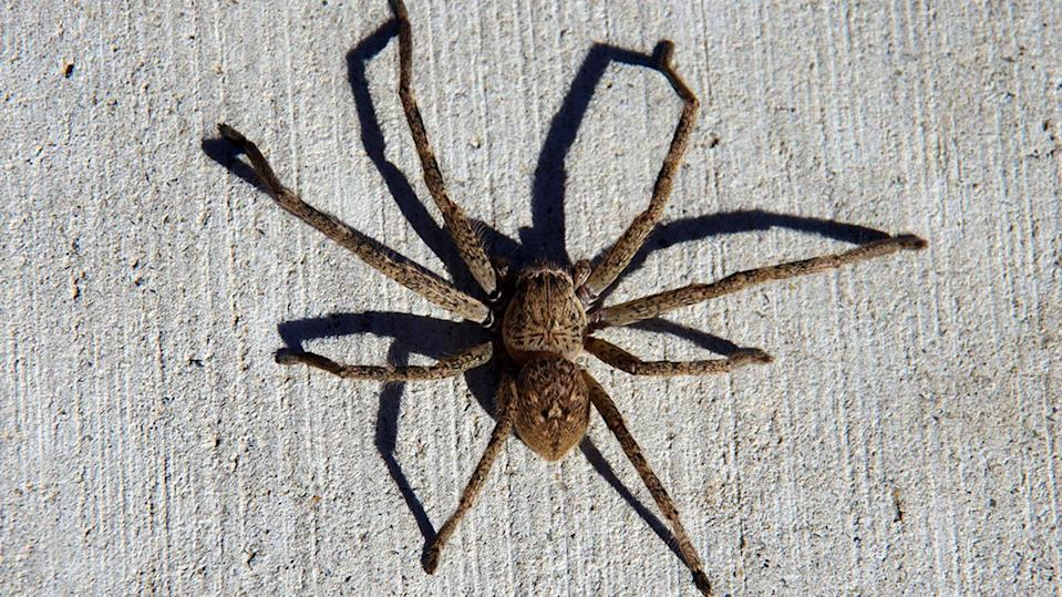 "A Perth man's arachnophobia ended with a ""lights and sirens"" response from the police. (Photo: File/Getty Images)"