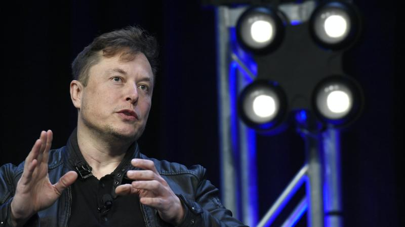 Elon Musk unveils brain-reading chip in pigs