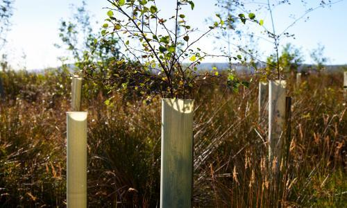 How the humble hedgerow can help us breathe