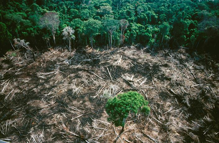 Clearing the forest destroys the equilibrium of water, minerals and organic matter. The threat to the Amazon rainforest is a threat to the world's climate balance. (Photo: COLLART Hervé/Sygma via Getty Images)