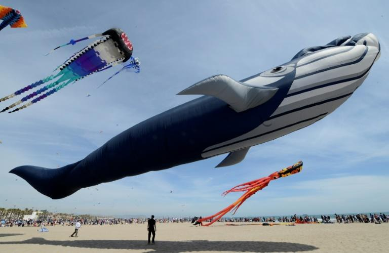 Spectators watch a giant whale kite and other kites flying during the Festival Internacional del Viento (International Festival of Wind) in Valencia (AFP Photo/JOSE JORDAN)