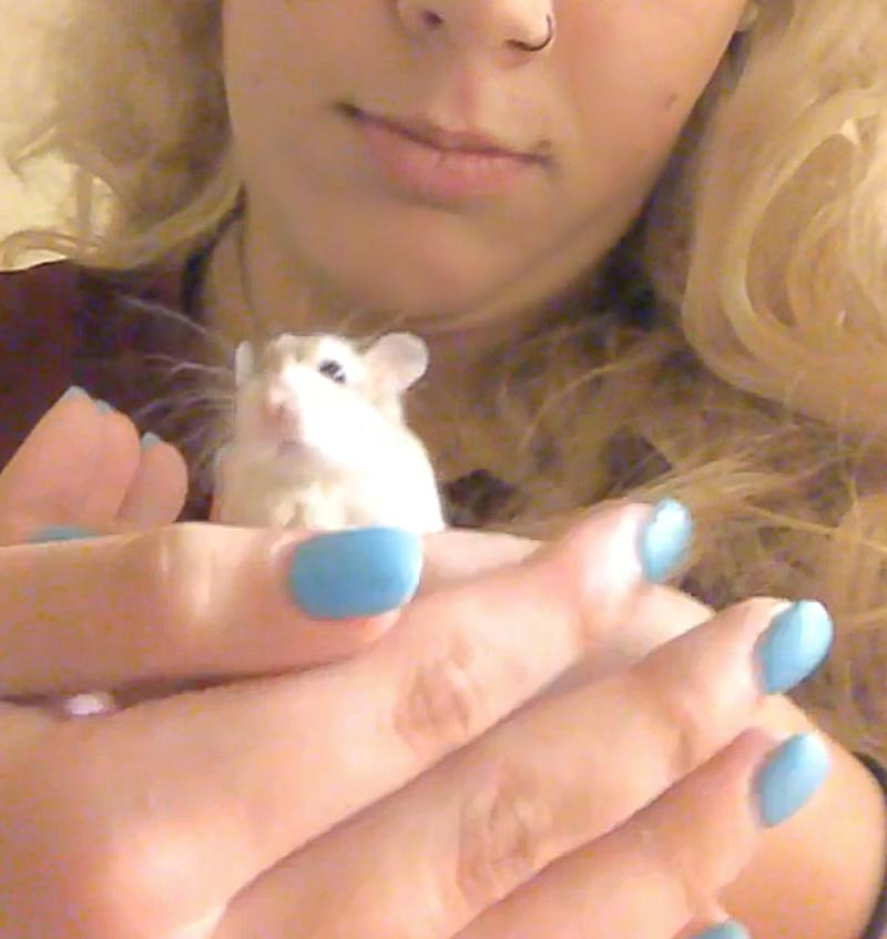 Spirit Airlines Slams Student Who Claims She Was Forced to Flush Emotional Support Hamster Down Toilet