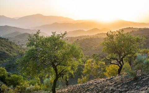 Both the UK's most popular names owe their roots to the humble olive tree - Credit: istock